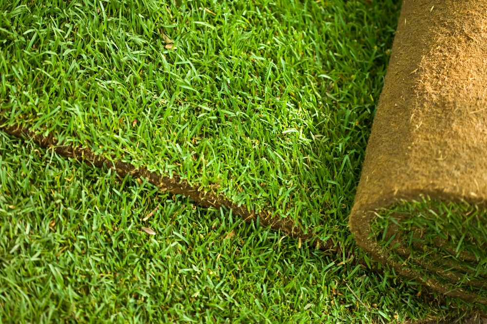 Lawn Maintenance and Repair Service in Cambridge