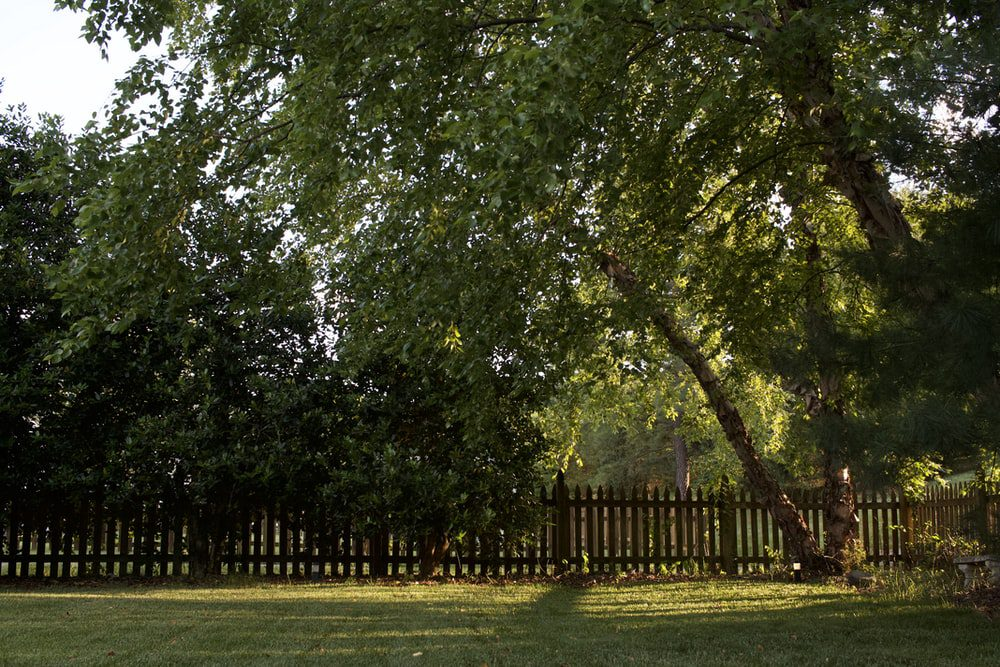 The Fundamental Guide to Choosing a Fence for your Garden